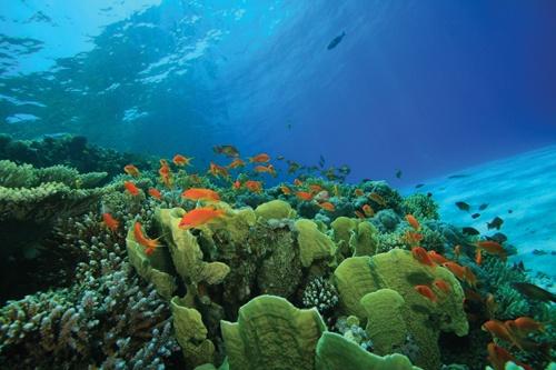GBarrier-Reef_54727867WEB