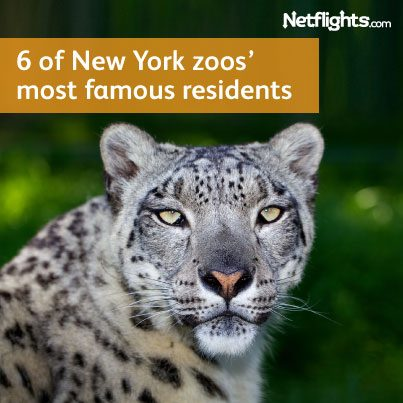 403x403_Newyorkzoo