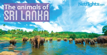 The animals of Sri Lanka