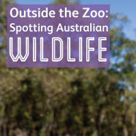 Outside the zoo: Spotting Australian wildlife