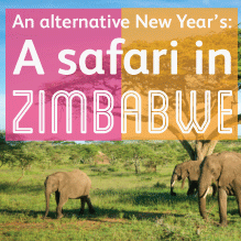 An alternative New Year: Safari in Zimbabwe