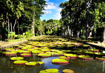 Gardens in Mauritius