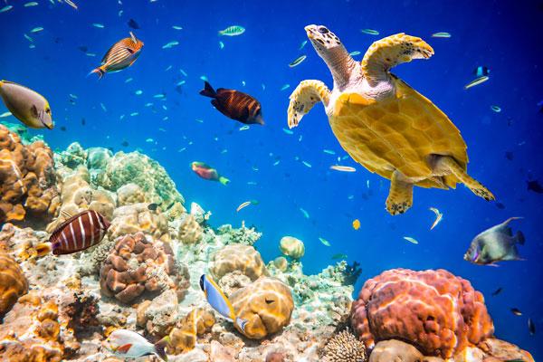 Sealife in the Indian Ocean