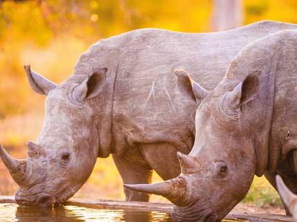 Rhino South Africa