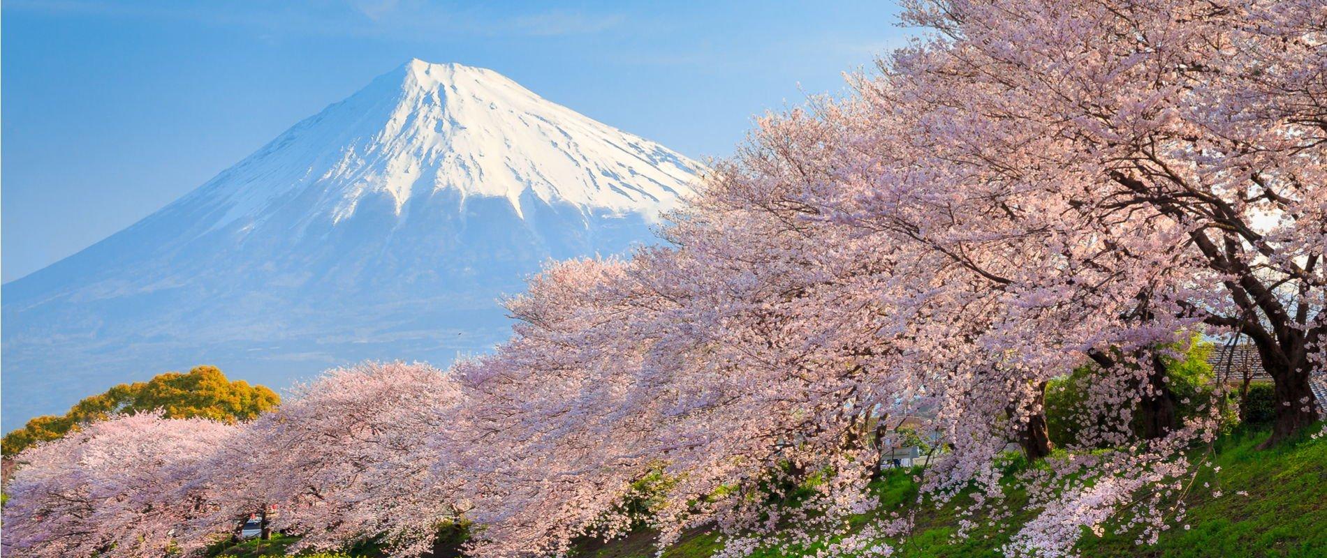 Sakura and Mountain Fuji