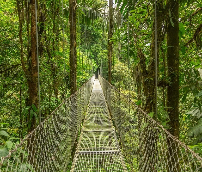 Costa Rica hanging bridge