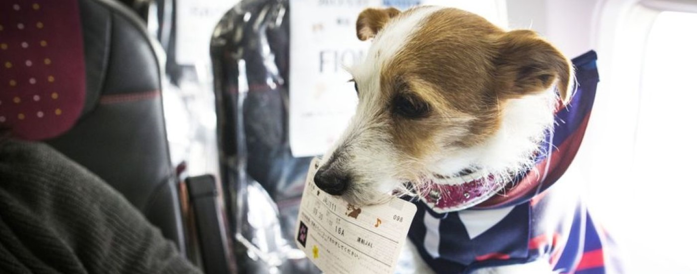 Our seven favourite emotional support animals for nervous flyers