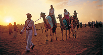 Dubai attraction - camel rides