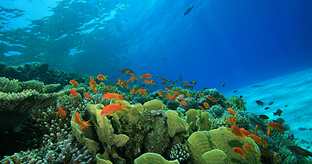 A view of fish underwater in Cairns