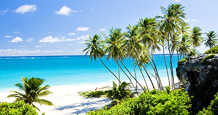 Palm trees on a beach in Barbados
