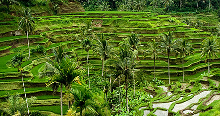 An image of a beautiful garden in Bali