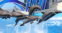 Dolphins in Orlando