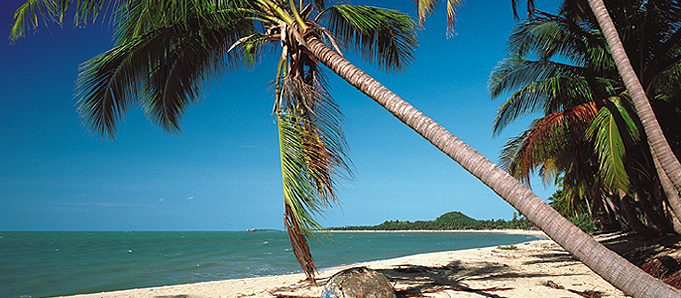 An image of a palm tree on a beach in Koh Samui