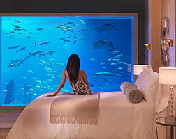 Accommodation Information at Atlantis The Palm Dubai