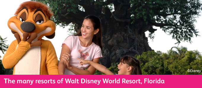 Walt Disney World Resort Guide Lion King