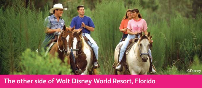 More To Do At Disney Horse