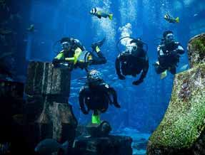 Diving at Atlantis The Palm